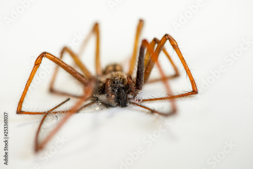 Macro closeup on hairy dead spider - 253361037
