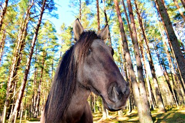 horses portrait...