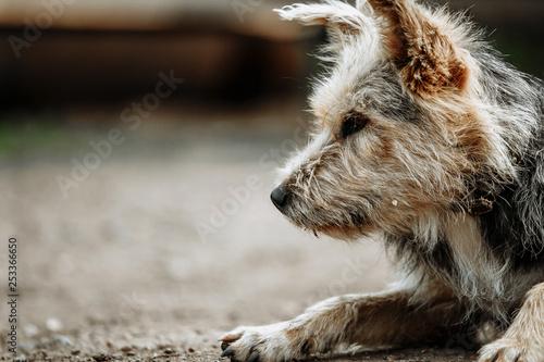 Leinwandbild Motiv stray, diseased and poorly dog