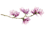 Watercolor magnolia and leaves horizontal card. Hand painted flowers and green leaves on branch isolated on white background. Floral elegant illustration for design, print. - 253376450