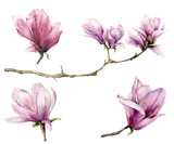 Watercolor branch and magnolia set. Hand painted flowers isolated on white background. Floral elegant illustration for design, print. - 253376683