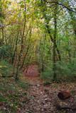 Fototapeta Las - Forêt d'automne © L.Bouvier