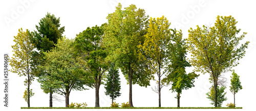 Foto Murales Green trees isolated on white background. Forest and foliage in summer
