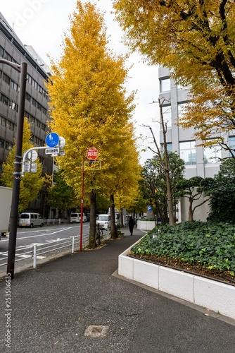 Fall street - 253506635