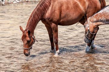 konie w wodzie