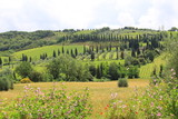 Fototapeta Natura - toscana © Hubert