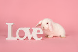 Young cute white rabbit seen from the side with letters love on a pink background