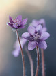 Przylaszczka - Wiosenne kwiaty