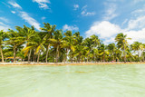 Clear water and palm trees by the shore in Bois Jolan beach in Guadeloupe