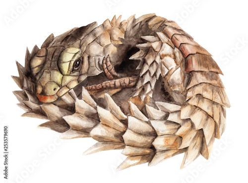 watercolor painting of animals lizards - Belttailed, dragon