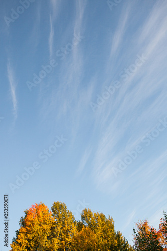 Autumn colors in tree foliage and blue sky © Juhku