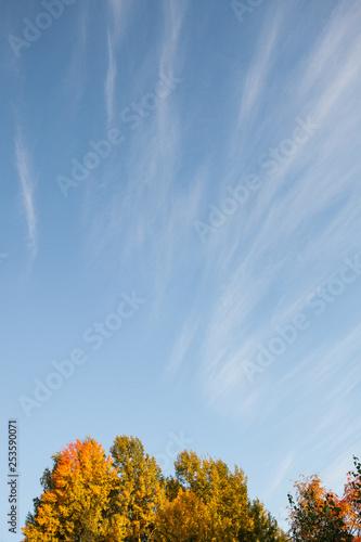 Autumn colors in tree foliage and blue sky © Juhku