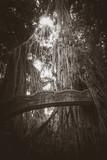 Old bridge in the Monkey Forest, Ubud, Bali, Indonesia