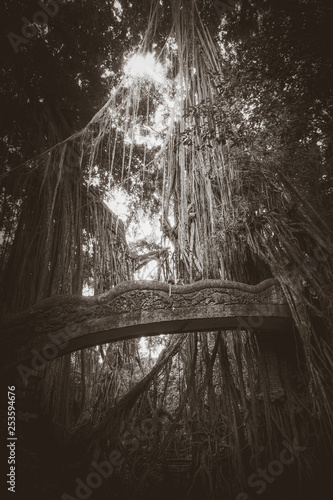 Old bridge in the Monkey Forest, Ubud, Bali, Indonesia - 253594676
