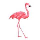Pink flamingo watercolor vector