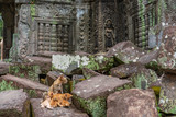 Cat with kittens in ruins of Ta Prohm temple, Cambodia