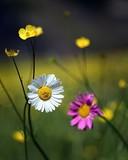 endemic flower types.artvin