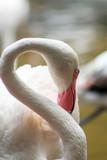 closeup of pink flamingo