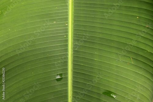 Beautiful green close up shots of tropical plant leaves taken on the tropical Seychelles islands - 253862210