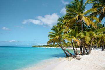 palm tree on the beach saona island