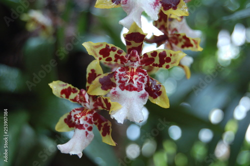 red and yellow orchids in bloom