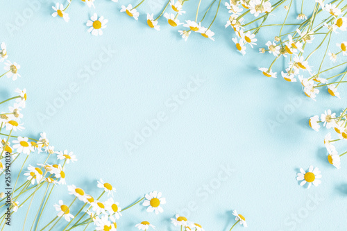 Flowers composition. Chamomile flowers on pastel blue background. Spring, summer concept. Flat lay, top view, copy space - 253942839