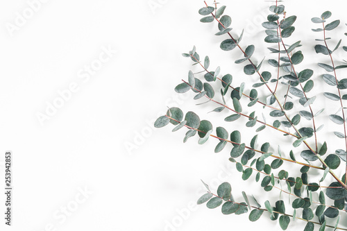 Eucalyptus leaves on white background. Frame made of eucalyptus branches. Flat lay, top view, copy space - 253942853