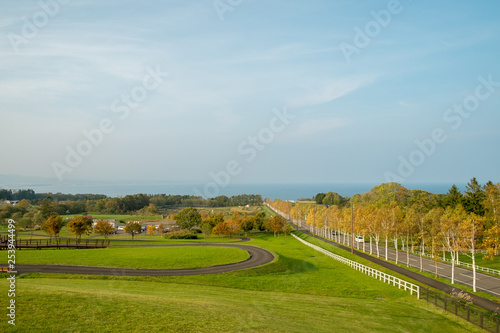 秋の白樺並木と水平線 © takke_mei