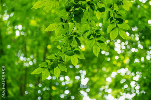 Green leaves over abstract background - 253989239
