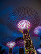 Leinwanddruck Bild - Gardens by the bay in Singapore