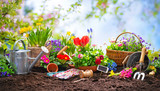 Planting spring flowers in the garden