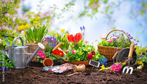Planting spring flowers in the garden - 254009268