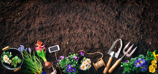 Gardening tools and flowers on soil