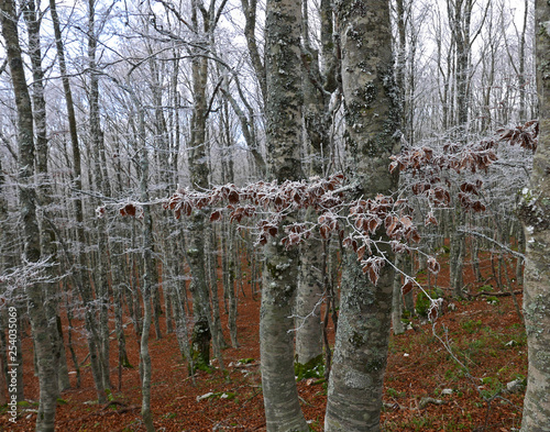 natura gelata in un bosco in inverno