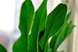 macro, green plant3