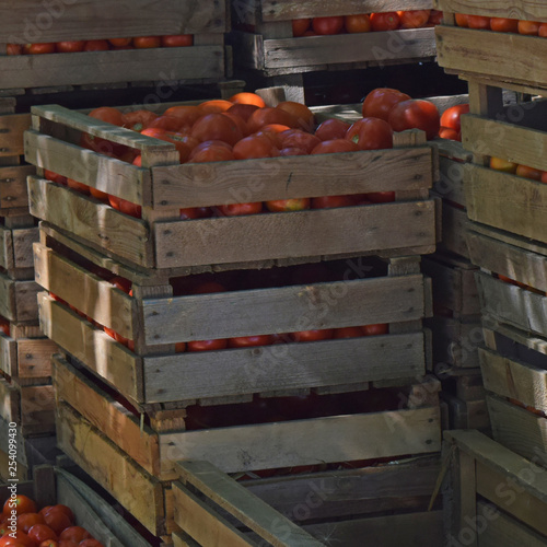 Tomatoes in wooden boxes