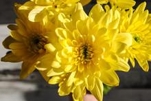"Постер, картина, фотообои ""Yellow chrysanthemum on the table"""