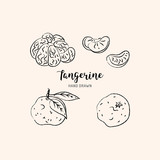 Tangerine drawing Vector hand drawn mandarin. Sketch of tangerines on white background, Vector isolated icons set