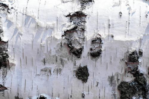 white birch bark. wood texture. background - 254193612