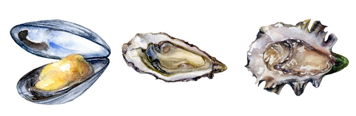 Watercolor hand drawn illustration of seashell, mollusk. © diidik