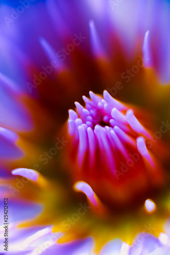 Abstract colored background close up. Macro. - 254212452
