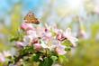 Leinwanddruck Bild - Frühling 447