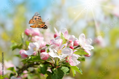 Frühling 447