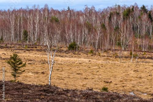 Hochmoor im Frühjahr mit Birkenwald