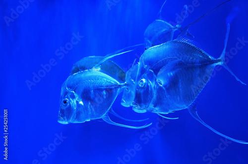 obraz PCV Underwater scene with fishes