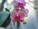 colorful orchid blossom
