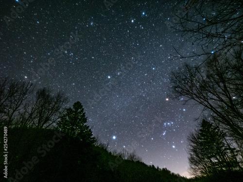 冬の森の星空