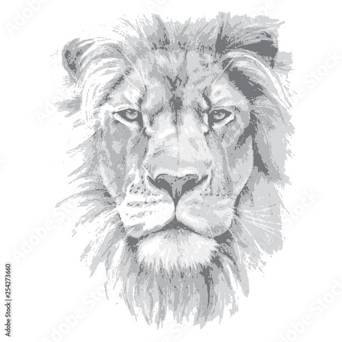 Lion head. Hand drawn vector illustration