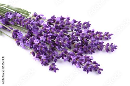 Bouquet of lavender. - 254277458
