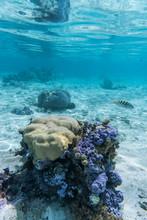 "Постер, картина, фотообои ""Tahiti Snorkel"""